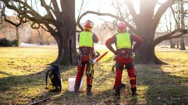 Tree Loppers Public Liability Insurance: What Is It and How Does it Help?